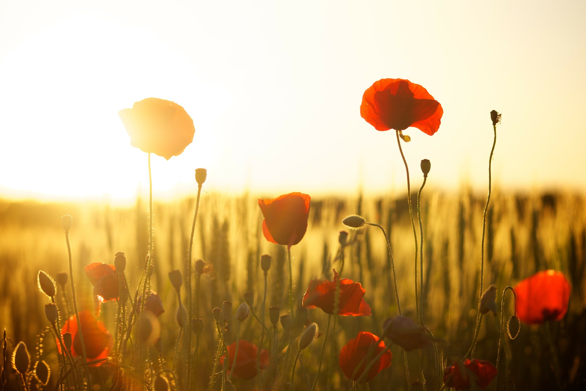 Bells to ring out across the country (including the diocese!) for the Armistice centenary